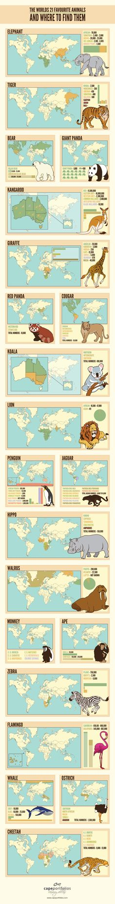 A beautifully designed infographic which explains the roaming habits of the world's favourite animals. It also gives an idea about population declines