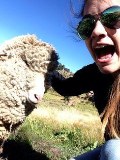 Sheeeeeeeeep! Sheep selfies!!  Lake Titicaca June 2015