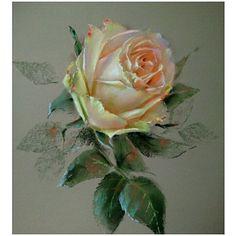 Rose #softpastel Unison colour, Rembrandt, Canson touch A4 Роза с этапами #pastelpainting #rosepainting #flowersart #rose #yellowrose #howtodraw #flowerspainting #roseoftheday #floweroftheday #floweroftheday #bestpastelart #topcreator #roselover #fleurs #myartwork #mydrawing #dailypainting #роза #цветок #рисуюцветы #я_автор_работы #одинденьсхудожником #ярисую #unisonpastels #cansonpaper #pastelart