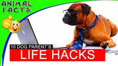 10 Life Hacks for DOgs Tips 101 Howto