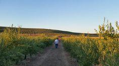 Andando por los campos de nuestra Arbosana para 2016 #DiariodeCampaña