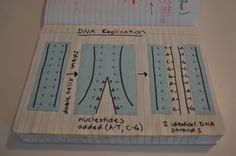 Science Interactive Notebooks - Mrs. Kuebler Cluster 7.2 Life Science
