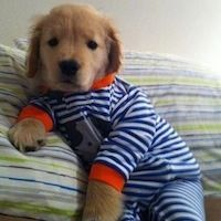 It seems that a lot of people dress their dogs up in onesies and toddler shorts.