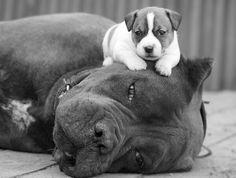Dad &son.....