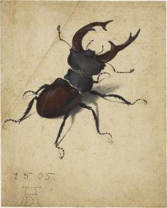 """Stag Beetle"" by Albrecht Dürer via DailyArt app, your daily dose of art getdailyart.com"