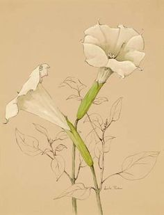 Lucile Parker White Lillies  20th century