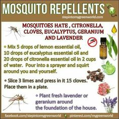 Irritation from mosquito bites can be irritating. The best way to deal with mosquito bites is to prevent them in the first place with natural repellents. Citronella Essential Oil, Eucalyptus Essential Oil, Lemon Essential Oils, Lemon Eucalyptus, Doterra, Best Mosquito Repellent, Insect Repellent, Fly Repellant, Natural Mosquito Spray