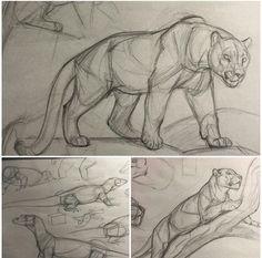 New Art Sketches Animal Sketches, Art Drawings Sketches, Animal Drawings, Cool Drawings, Drawing Animals, Big Cats Art, Cat Art, Cat Anatomy, Animal Anatomy