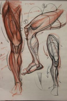Enjoy a collection of references for Character Design: Legs Anatomy. The collection contains illustrations, sketches, model sheets and tutorials… This Drawing Legs, Drawing Poses, Life Drawing, Figure Drawing, Leg Anatomy, Anatomy Poses, Heart Anatomy, Human Anatomy Drawing, Human Body Anatomy