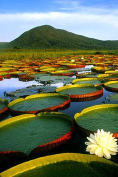 A colourful lake in Brazil