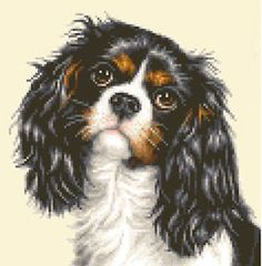 vintage cavalier king charles dog collectibles | Details about CAVALIER KING CHARLES SPANIEL dog cross stitch kit
