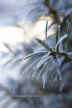AlexandraValentovic / Mrazivé ráno winter