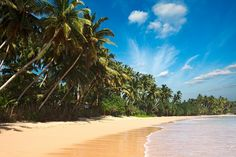 Photo about Tropical paradise idyllic beach. Image of serene, horizon, jungle - 14011846 Sri Lanka, Tropical Paradise, Paradise Beaches, Serenity, Tourism, Ocean, Stock Photos, Water, Outdoor