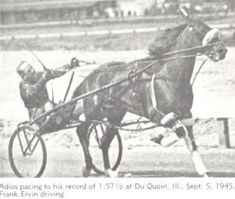 Adios. (1940-1965) Adios went on to become the greatest sire the sport has ever known. He produced a continuous stream of champion colts and fillies. Many became great sires and broodmares, thus carrying on his tradition of greatness. Two successful pacing lines descending from Adios are through Bret Hanover and Abercrombie. Standardbred Horse, Thoroughbred, Horse Racing, Race Horses, Harness Racing, Vintage Horse, Horse Breeds, Animals And Pets, Equestrian