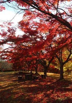 Deep Autumn by Sueo Takano
