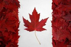 Children's books from Canadian authors or about Canada! Children Books on Canada** Happy Birthday Canada, Happy Canada Day, Barbados, I Am Canadian, Canadian Things, Canadian Flags, Canadian Maple, Canadian Bacon, Canada Eh