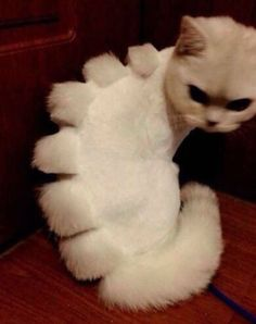 Persian Cat Haircut if shaving your cat, turn them into a cat dinosaurs, but he's doesn't look too happy about it. I Love Cats, Cute Cats, Funny Cats, Funny Animals, Cute Animals, Pretty Cats, Funny Jokes, Hilarious, Crazy Cat Lady
