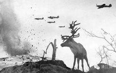 許 多 人 忘 記 了 戰 爭 對 大 自 然 及 人 類 的 影 響, 這 張 照 片 拍 攝 颶 風 戰 鬥 機 在 轟 炸 摩 爾 曼 斯 克 的 一 處 山 坡, 俄 羅 斯 的 一 隻 馴 鹿 見 慣 不 驚 的 在 一 旁 看 着。