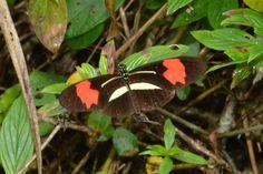Butterfly - Iguazu Falls