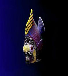 Tropical Fish...i truly Love it.... Beautiful.
