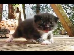 I Love This Kittens Learning to Walk Compilation