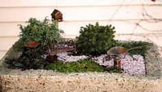 miniature+garden+2+(29).JPG 800×458 pixels