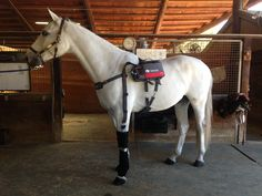 Horse Therapy, Horses, Animals, Animales, Animaux, Animal, Animais, Horse