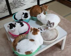 nekogamiteru:cute—animal—blog:かご猫 Blog6つのかご