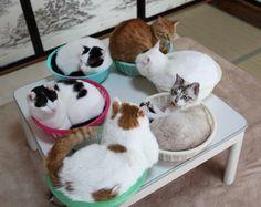 6つのかご猫