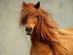 obrázek hnědý kůn
