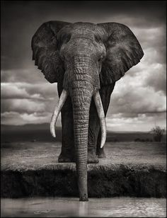 Nick Brandt is a photographer who photographs exclusively in Africa, one of  his goals being to record a visually poetic last testament to the wild  animals and places there before they are gone at the hands of man.  Born and raised in London, Nick Brandt studied Film and Painting at St.  Marti