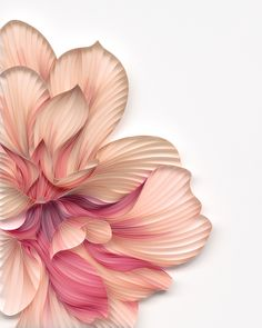 Mixing an architectural background together with the world of paper artwork, artistic duo JUDiTH + ROLFE from Minnesota designs intricately crafted plants and flowers. Art Floral, Floral Artwork, Paper Artwork, 3d Artwork, Artwork Ideas, Artwork Pictures, Art 3d, Artwork Design, Quilled Paper Art