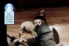 Guitar loving Doggie. #video  http://www.dogvideooftheweek.com/videos/view/3327  #dvotw