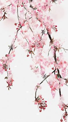 Cherry blossom watercolor close up More - blossom cherry cherryblossom close watercolor - MyKingList Cherry Blossom Wallpaper, Cherry Blossom Watercolor, Cherry Blossom Art, Blossom Trees, Flower Wallpaper, Watercolor Flowers, Watercolor Art, Chinese Cherry Blossom, Japanese Blossom