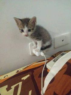 Cute Little Kittens, Cute Baby Cats, Cute Little Animals, Cute Funny Animals, Kittens Cutest, Cats And Kittens, Funny Animal Memes, Cat Memes, Funny Cats