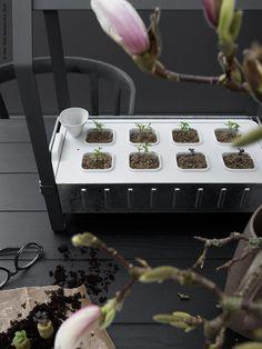 En vårblommande morgon | Livet Hemma – IKEA