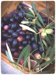 This year's olive harvest