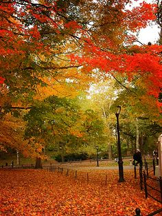 Autumn - Central Park, New York City #teatime https://www.facebook.com/CelestialSeasonings/app_593554104036964