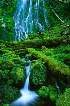 INSIDE FOREST- Stunning Pics (10), Proxy Falls in Oregon.