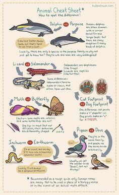 biology cartoon Animal Cheat Sheet Helps Spot Differences Between Similar Creatures Environmental Education, Science Education, Science Comics, Science Notes, Forensic Science, Physical Education, Tier Zoo, Marine Biology, Biology Art
