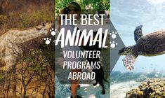 Find the best animal volunteer programs abroad! With project options to meet every animal lovers needs…