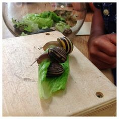 Our Kindergarten Journey: The Start of Our Snail Inquiry