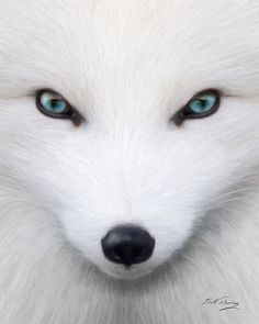 January Features- The Arctic Fox! by AnimalsofTheWorld on deviantART