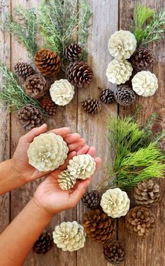 "Make beautiful ""bleached pinecones"" in 5 minutes without bleach! Non-toxic & easy DIY craft, perfect for fall, winter, Thanksgiving & Christmas decorations! for christmas table easy diy Easiest 5 Minute 'Bleached Pinecones' {without Bleach! Easy Christmas Decorations, Pine Cone Decorations, Christmas Diy, Christmas Wreaths, Christmas Ornaments, Pinecone Christmas Crafts, Rustic Christmas, Christmas Pine Cones, Coastal Christmas"