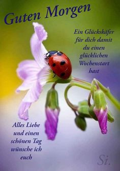 Smiley, Quotes, Ladybugs, Fun, Christ, German, Wallpapers, Facebook, German Quotes