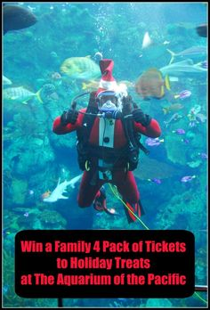 Get into the holiday spirit early, and share the fun as the Aquarium of the Pacific's animals receive their gifts from Santa Diver.  In celebration of the holiday season, Santa Diver will be delivering treats to the Aquarium of the Pacific's penguins, sea otters, seals, sea lions, birds, fish, and other animals during Holiday Treats for the Animals weekend on Saturday and Sunday, December 5-6, 2015 from 9 am – 5 pm.