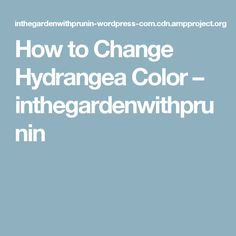 How to Change Hydrangea Color  – inthegardenwithprunin
