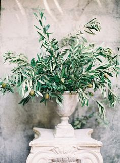 lovely olive branches in taller arrangements