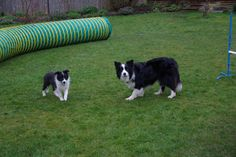 Jamie and Jade with Agility Equipment