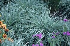 Shade Tolerant Ornamental Grasses and Grass-Like Plants Shade Tolerant Grass, Shade Grass, Plants That Like Shade, Shade Plants, Shade Garden, Garden Plants, Ornamental Grasses For Shade, Plant Pictures, Flower Planters